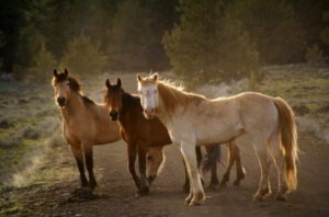 Sights Wild Mustangs